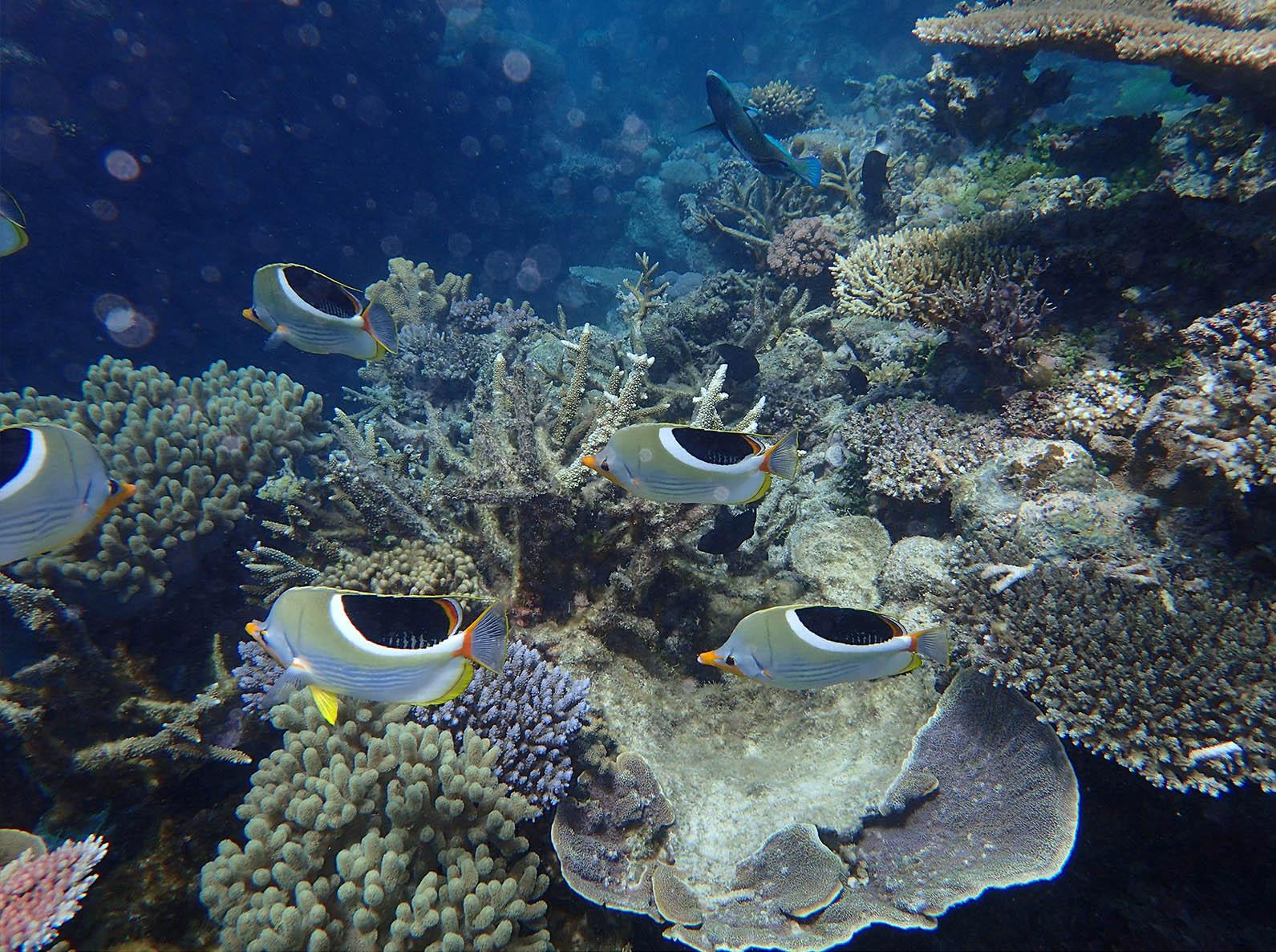 Taku Mbudzi Snorkelling Great Barrier Reef Silence 1