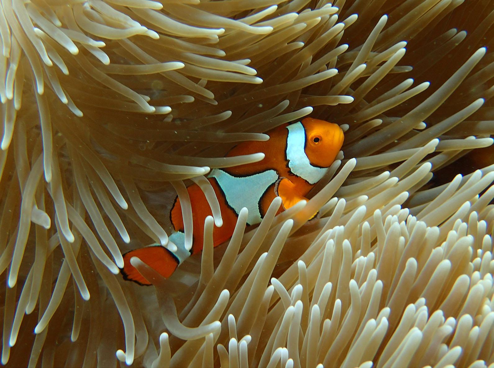 Taku Mbudzi Snorkelling Great Barrier Reef Silence 2