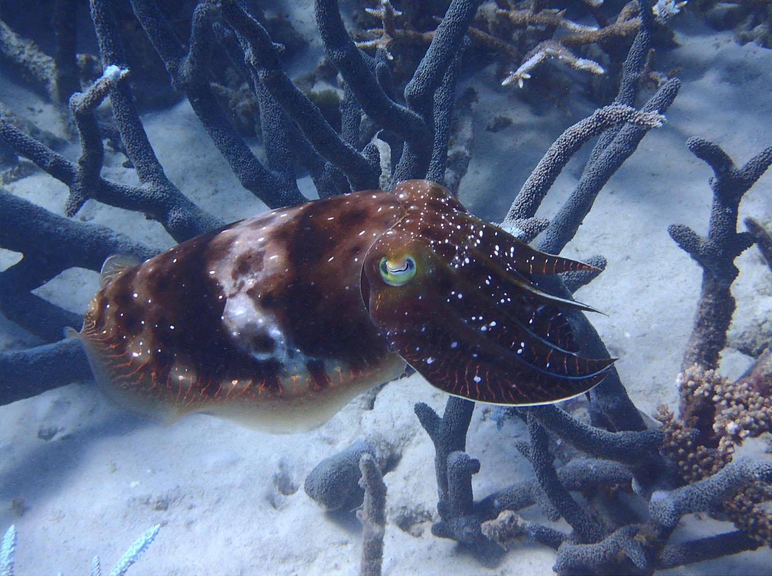 Taku Mbudzi Snorkelling Great Barrier Reef Silence 6