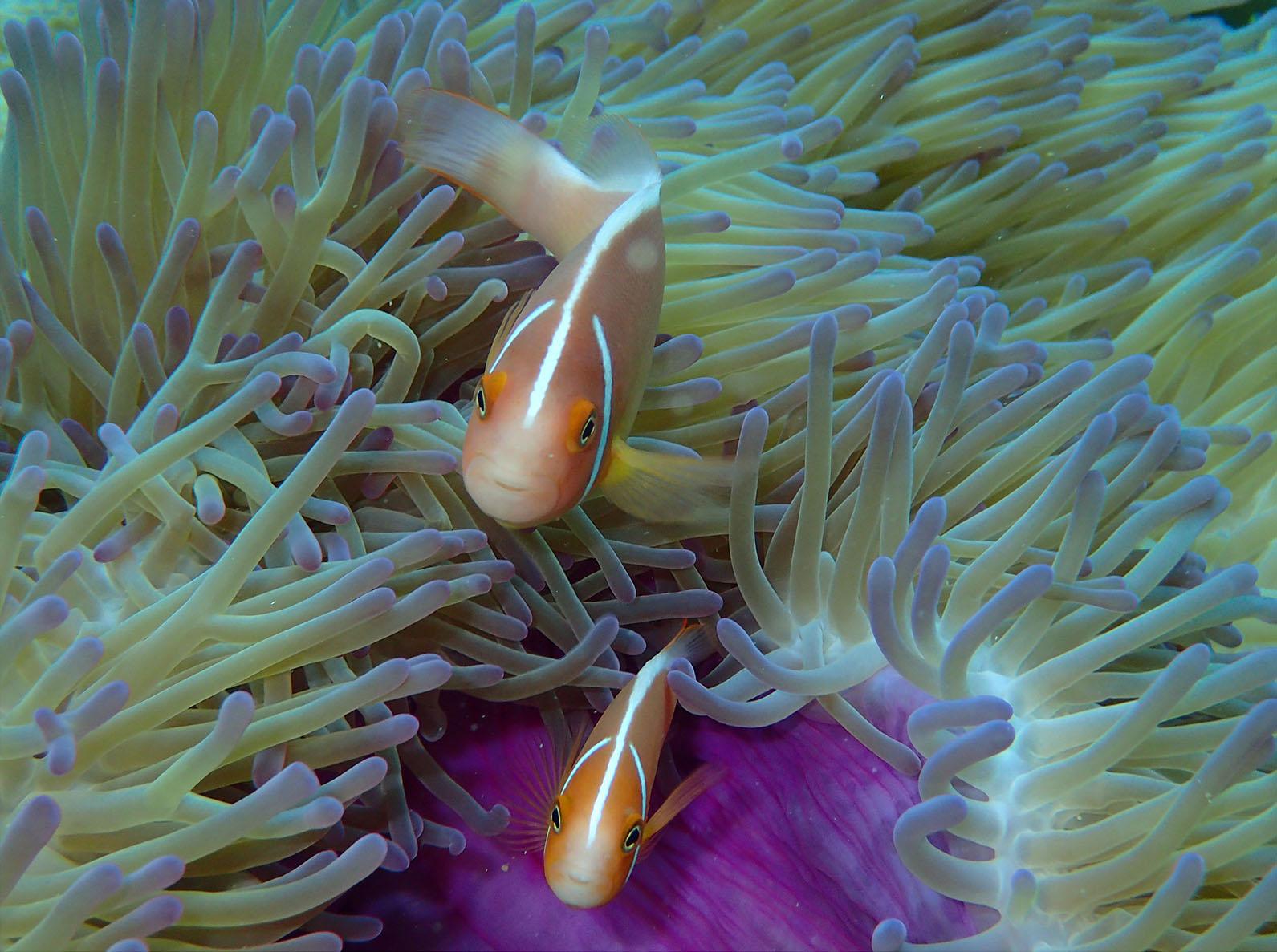 Taku Mbudzi Snorkelling Great Barrier Reef Silence 7