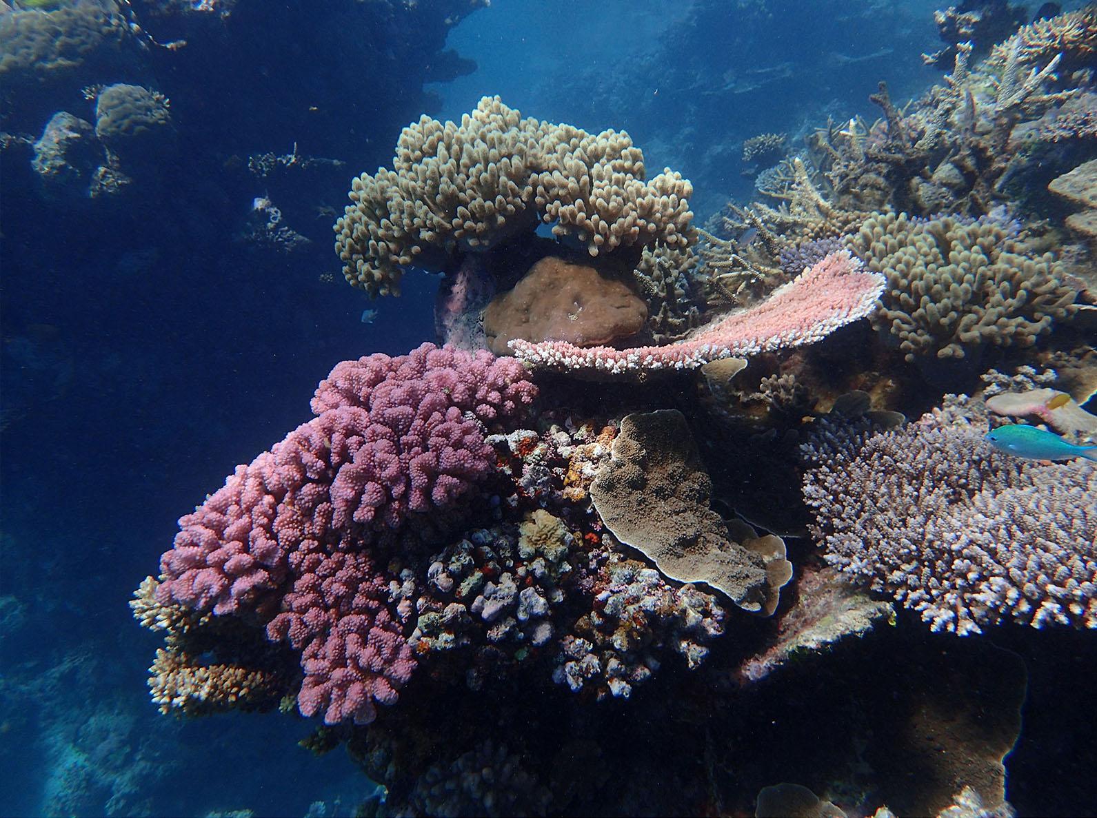 Taku Mbudzi Snorkelling Great Barrier Reef Silence 8