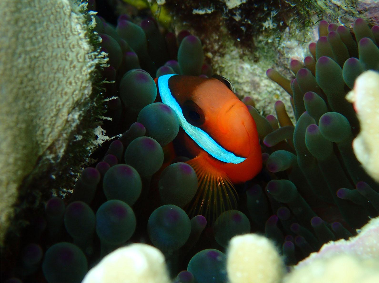 Taku Mbudzi Snorkelling Great Barrier Reef Silence Qld
