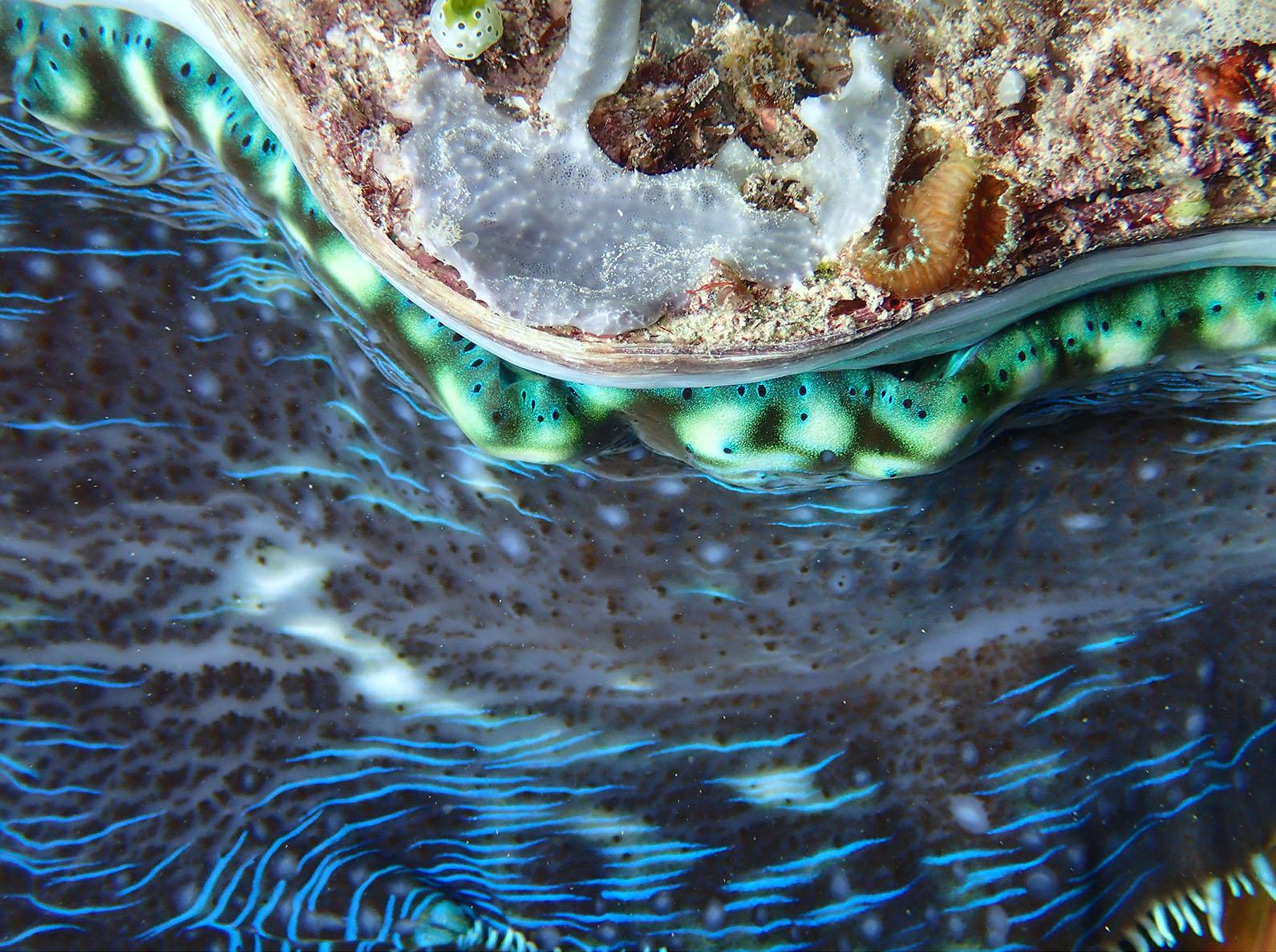 Taku Mbudzi Snorkelling Silence Great Barrier Reef